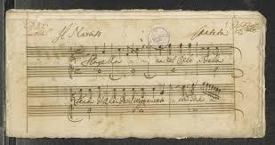 Note di narciso